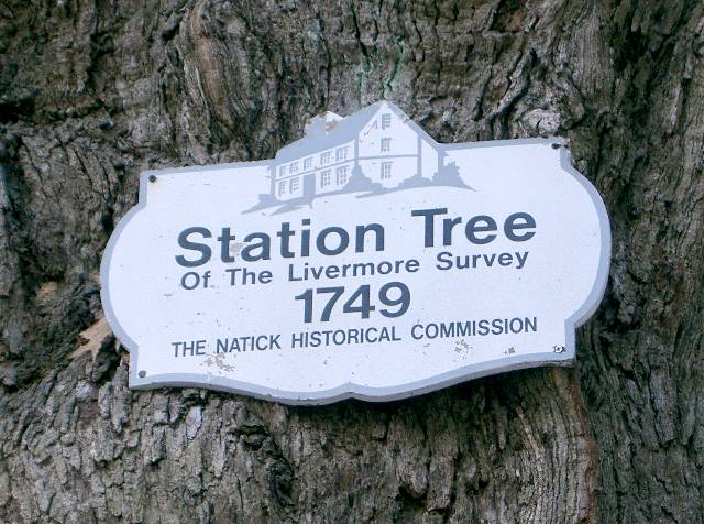 Plaque on Natick's Station Tree